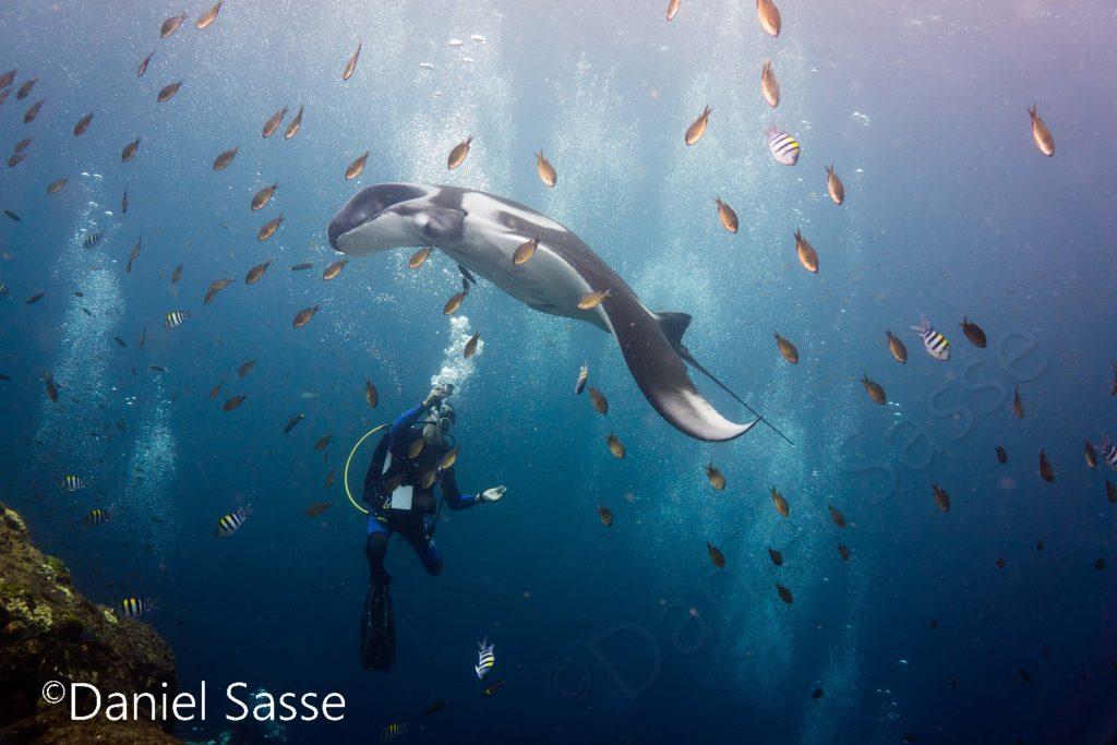 Manta Ray with Diver Patreon