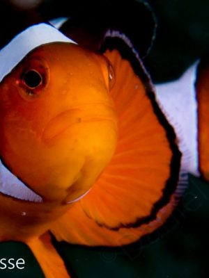 Nemo Portrait