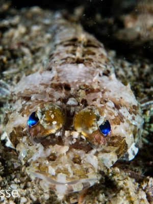 Flathead Fish