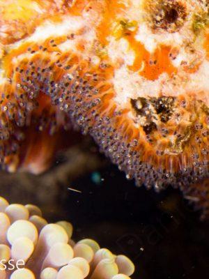 Nemo Eggs
