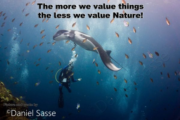 The-more-we-value-things Postcard