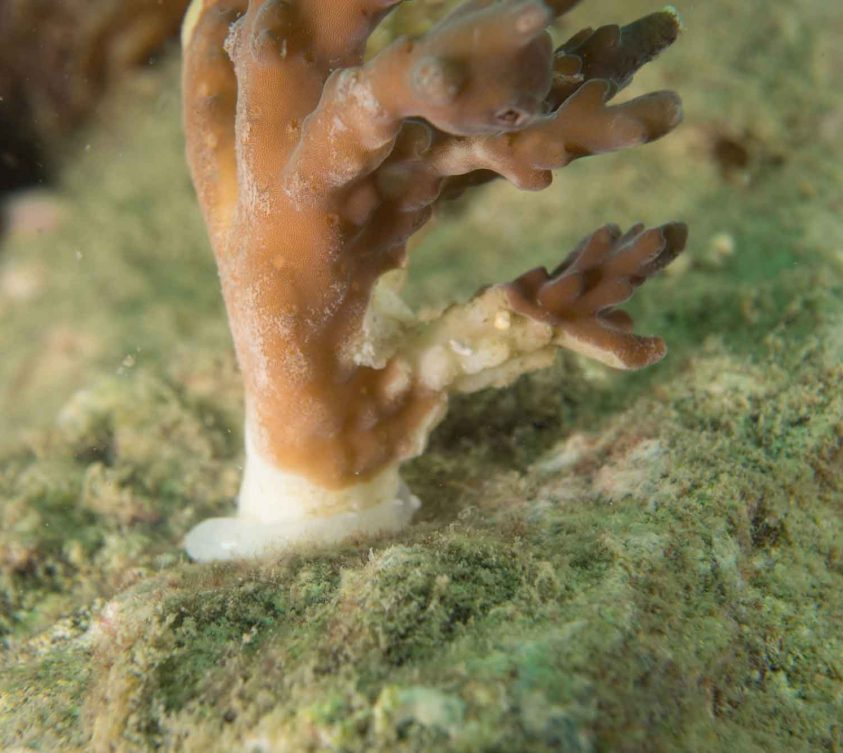 Coral Plugging Meeresschutz Projekt